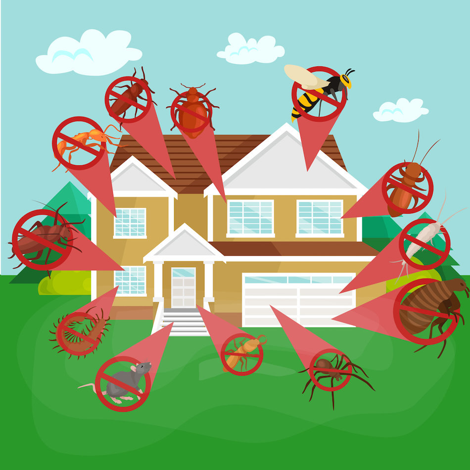 What  Homeowners Can Do About Pests