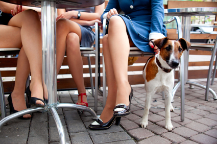 Dog Friendly Restaurants in Jupiter, FL
